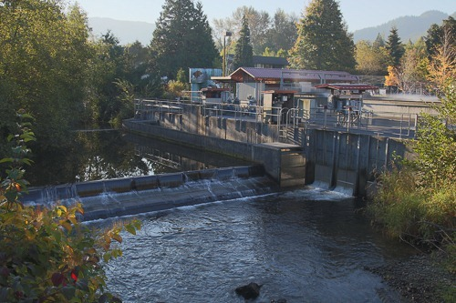 Issaquah Salmon Hatchery and Issaquah Creek
