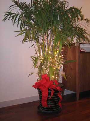 Our Christmas bamboo plant, complete with lights and a red bow.