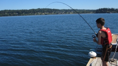 Andrew fishing from the dock with his pole signficantly bent as he reels in a dogfish.