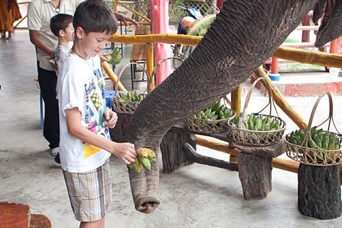 Andrew feeding a bunch of bananas to an elephant.