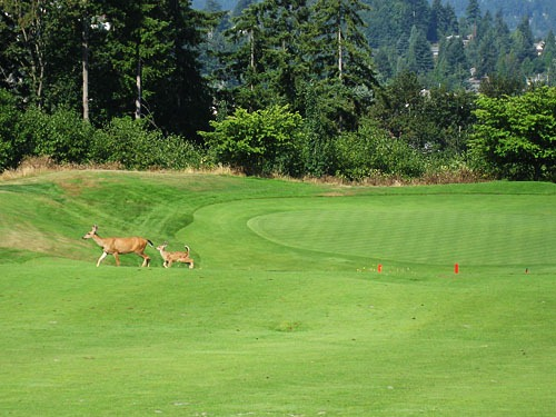 Mother and baby deer in front of a green.