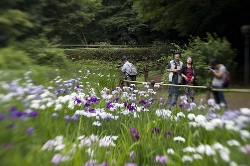Japanese photographers taking in the irises.