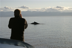 Cap't Dan taking a picture of the grey whale just forward of the boat.