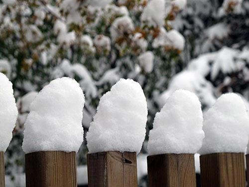 Little piles of snow on my fence.