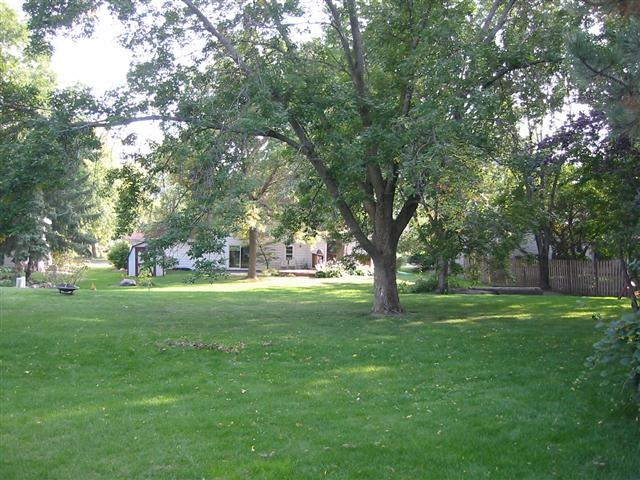 Photo of the back yard. It's flat with biggish trees.
