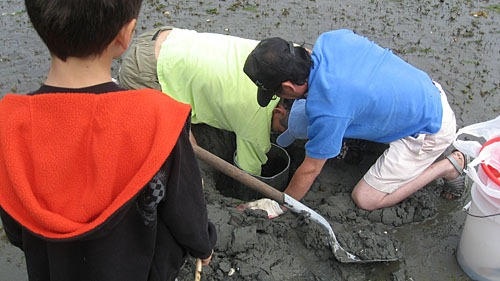 Two men dig for geoducks as Michael looks on.