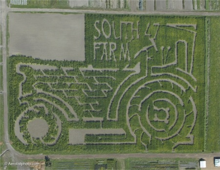 South47Farm2008CornMaze