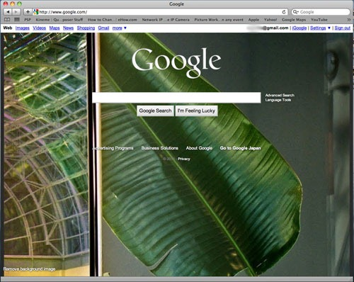 Google homepage with a green leaf photo in the background.